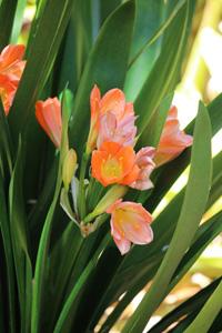 Brisbane Botanic Garden Pflanzen