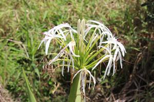 Byron Bay Pflanzen